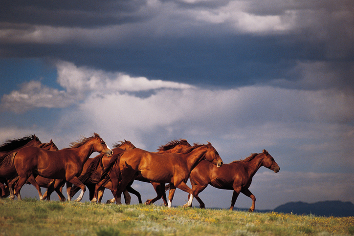 Horses for sale Vermont, Camp Horses for Lease, Selling Horses for