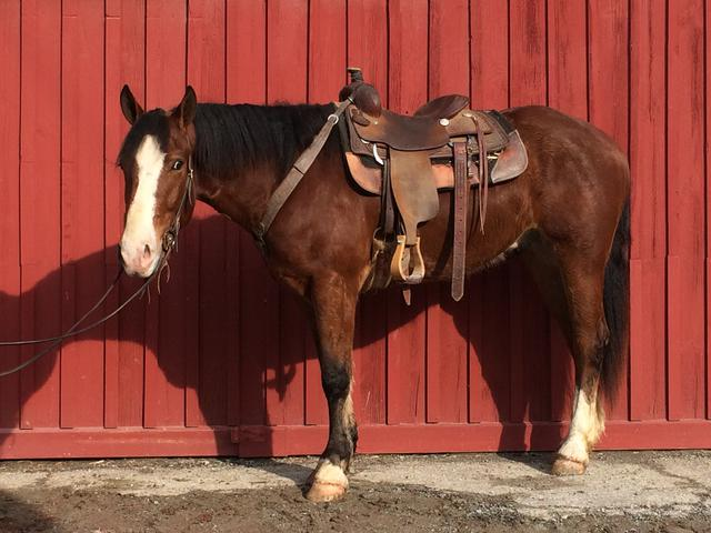 Horses For Sale Vermont Camp Horses For Lease Selling