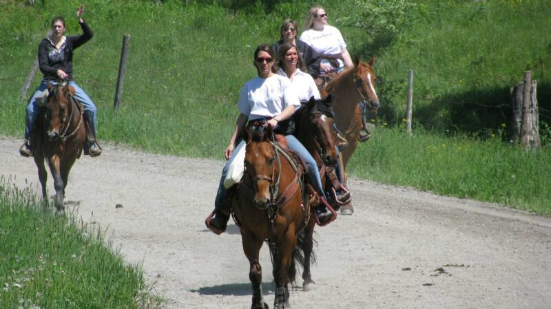 Horses for Lease, Horses for lease in the Northeast, Lease Horses